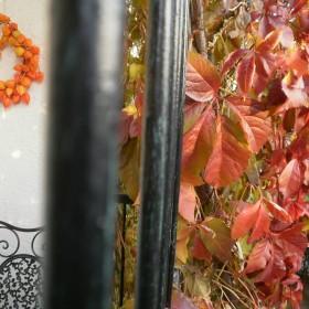 Pan listopad i ...lato na moim balkonie