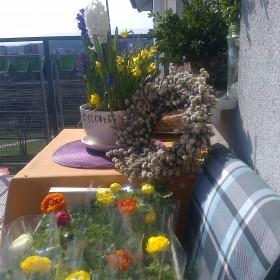 wiosna zawitała na moim balkonie.....