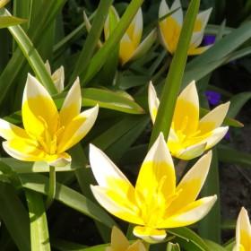 Wreszcie wiosna w moim ogrodzie