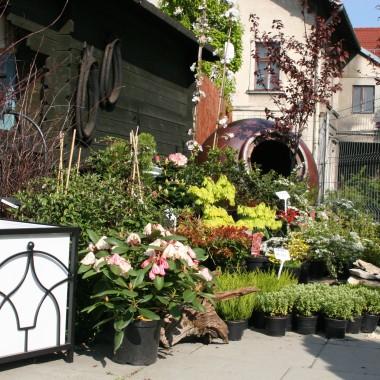 A tak u nas wygląda wiosna &#x3B;] Zapraszamy na zakupy i po inspiracje - tym bardziej że przez kilka dni będzie teraz aktywny Voucher na 50% rabat w naszej Galerii Ogrodowej, szczegóły tutaj: http://www.mydeal.pl/krakow/deal/1926/5f1c6c428410917f585b9f92ee0fb8c6