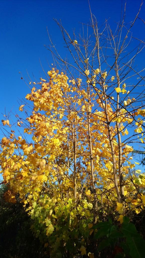 Ogród, Już listopad ............. - ................i złoto jesieni................