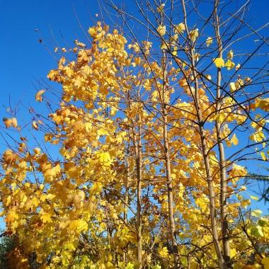 ................i złoto jesieni................