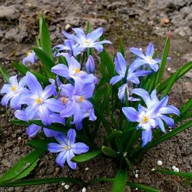 Do mojego ogrodu zawitała wiosna