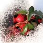 Rośliny, Przedwiośnie - Nieśmiało topnieje zimowa skorupa, pozwólcie do słońca przez szybę zastukać.
