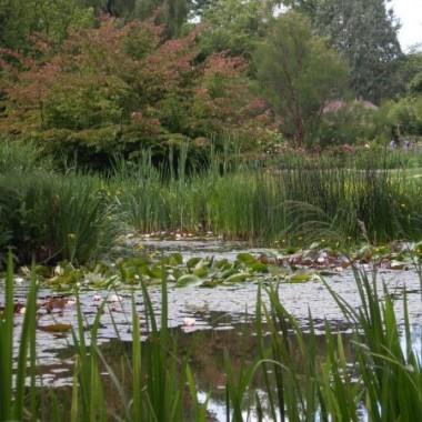 """Święto Ogrodów to niezwykły festiwal zieloności. To jedyna w roku okazja dla mieszkańców Krakowa by zobaczyć zazwyczaj niedostępne krakowskie ogrody: królewskie, przyklasztorne, prywatne. """"Święto Ogrodów 2009"""" odbędzie się w dniach 5 - 14 czerwca 2009 rokProgram dostępny jest na naszym forum:  http://deccoria.pl/forum/temat,77,2259,1#p6871"""