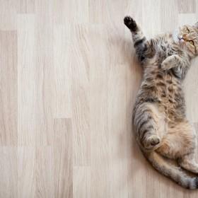 Pielęgnacja podłogi — jak usunąć rysy i ubytki?