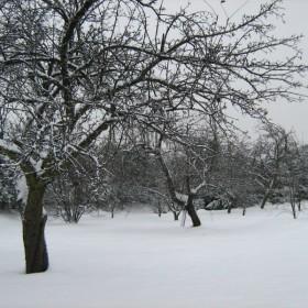 Śnieżna galeria