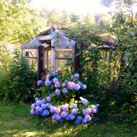 Uchwycone w ogrodzie