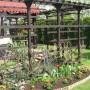Ogród, moja dzialeczka