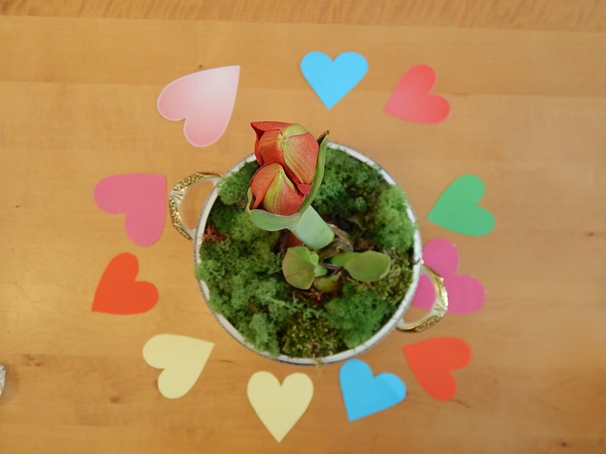 Rośliny, LOVE & FLOWERS