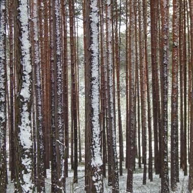 Prószy śnieg.Las się srebrzy i bieli.Słońce przenika przez chmury.Z szarości wyłania się wyrazistość.To kontrast barw,światła,przestrzeni...Czy to fotograficzna gradacja szarości ?Nic z tych rzeczy...Niezależnie od pory roku leśny krajobraz wywołuje emocje.Uspokaja,zachwyca...budzi respekt.Czasami strach ?Nie polecam spacerów w samotności po leśnych bezdrożach.We dwoje wszystko jest piękniejsze :)Zapraszam na rodzinny spacer do zimowego lasu :)