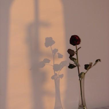 Róża od M