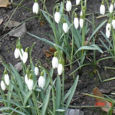 To już naprawdę wiosna