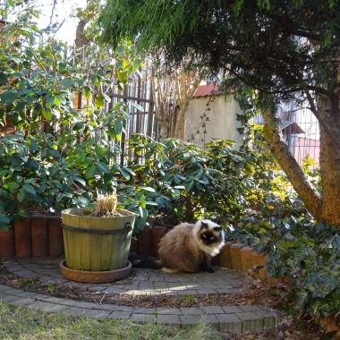 Ciepłe dni lutego i początku marca pozwoliły już wiośnie zajrzeć do mojego ogrodu. Co prawda bardzo dyskretnie, ale jednak. I kot też ją wyczuł.