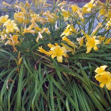 Lipcowy czas,to czas spędzany w  większości w ogrodzie.Zielono, kolorowo, słonecznie :)Po prostu, lipcowy czas...