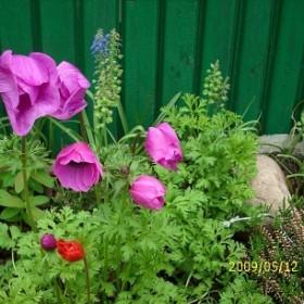 Kwiaty z mojej działki