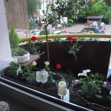 Troszke na moim balkonie sie zagęściło,ale to też z myślą na przyszłość.Mam nadzieję że część tych roslinek zimozielonych przetrwa zimę i w przyszłym roku wiosną to juz będzie pięknie.Bardzo lubię też kwitnące kawity na balkonie,dlatego też sobie nie żałowałam.Teraz to wszystko jest malutkie,ale sprawia mi ogromną radość jak kupę małe sadzonki, a potem cieszę się i widzę jak urosły.Zawsze miałam kwiaty na balkonie,a były to zazwyczaj pelargonie no i obowiązkowo wiszące u sufitu bacopy.Oglądając Wasze przepiękne balkony na deccorii postanowiłam posadzić troszke iglaczków i roslinek zimozielonych.Zapraszam do obejrzenia mojego balkoniku i oczywiście na kawkę lub herbatkę.