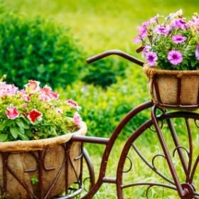 TOP 7 Rośliny kwitnące we wrześniu