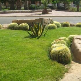 rośliny,ogród