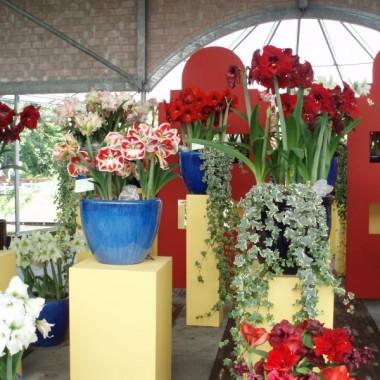 To Keukenhof, piekny ogrod wiosenny w Holandii. Uwielbiam to miejsce...kwiaty, kwiaty, kwiaty :) Te zdjecia sa z zeszlego roku, ale tej wiosny bedzie napewno rownie pieknie :))))Zycze milego spacerowania :))))