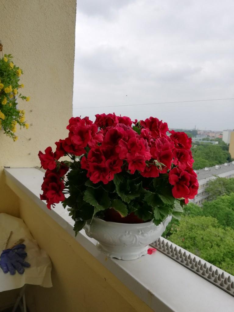 Mój skrawek szczęścia.... Balkon...