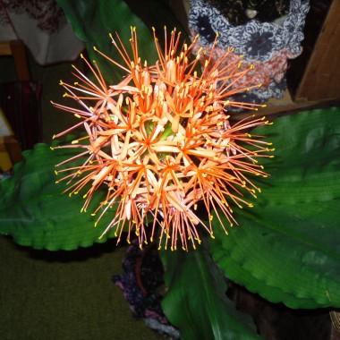 Pomocy, jaki to kwiat?