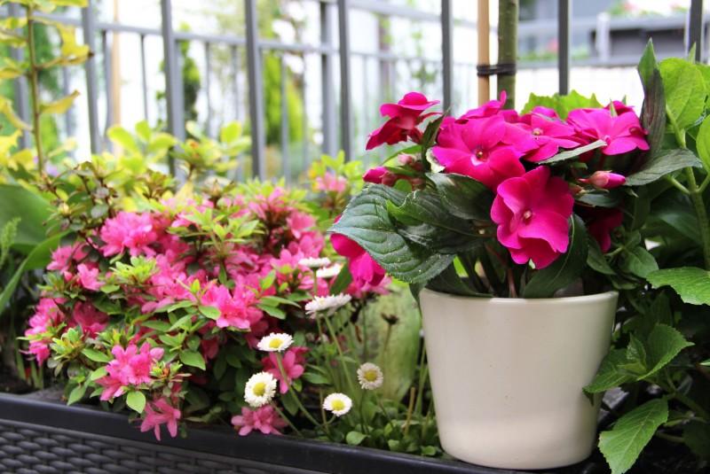Kwiaty Na Zacieniony Balkon Deccoriapl
