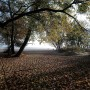 Rośliny, Złoto jesieni i moje zielone bombki..... - Pozdrowienia serdeczne dla Was znad morza ślę i zdrowia życzę :)