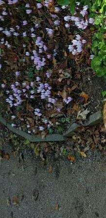 Pozostałe, Wiosna na JERSEY i piękne widoki.
