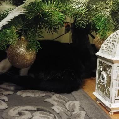 Kotek odpoczywa pod choinką:)