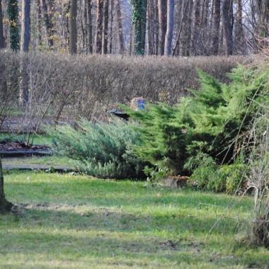 Syn pięknie wygrabił nam trawniki ,jest tak czyściutko dziś w lasku :)