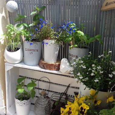 Balkonowe zioła i kwiaty