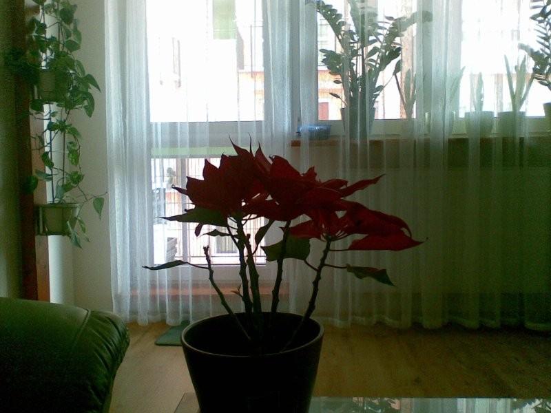 Rośliny, Moje kwiatki