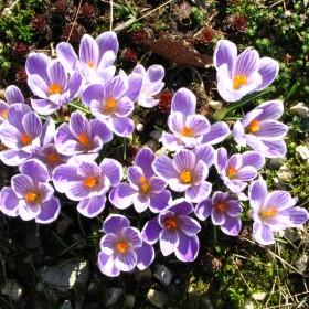 wiosna u mnie w ogrodzie