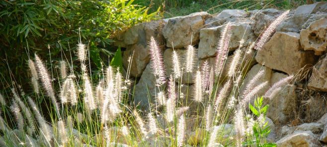 Trawy ozdobne w ogrodzie. Jak je pielęgnować i gdzie sadzić?