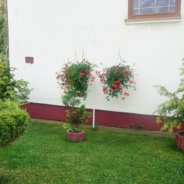 Kwiaty balkonowe .