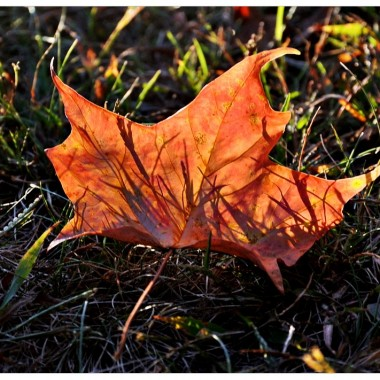 Spadający liść.