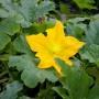 Rośliny, kwiaty
