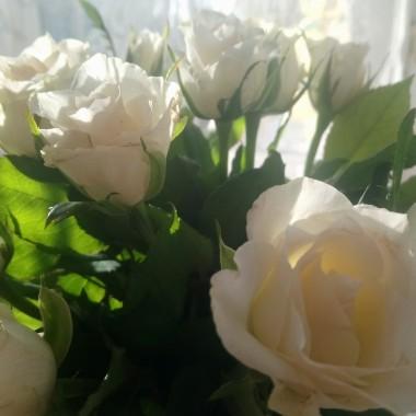 ...............i białe róże............