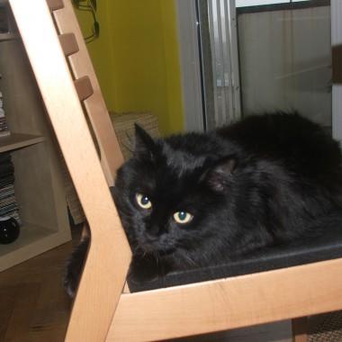 Imoje 3 koty:  Oto Nigra...