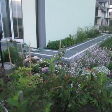 Przy tarasie rośnie bardzo pachnąca maciejka i roślinki przypominające wiejskie klimaty /wspomnienie babcinego ogródka/