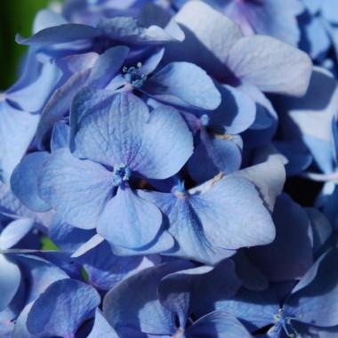 Zapraszam do sielskiego ogrodu pełnego słońca i kwiatów i na sielskidomekwdolinie.blogspot.com
