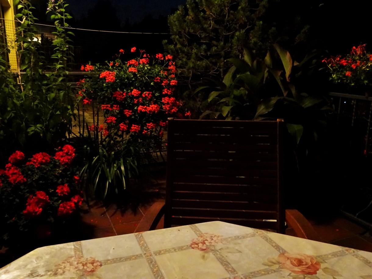 Balkon, Wrześniowa pelargonia