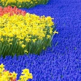Międzynarodowa Wystawa Kwiatów
