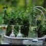 Pozostałe, Moje domowe żródło witamin - No i mięta obowiązkowo i jest jest wokół domu całkiem sporo w róznych pojemnikach i nawet w gruncie :)