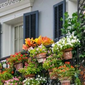 Jakie rośliny uprawiać na południowym balkonie?