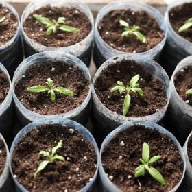Warzywa i kwiaty – co siejemy w marcu?
