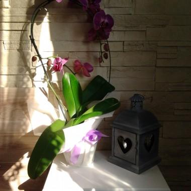 Kwiatki domowe