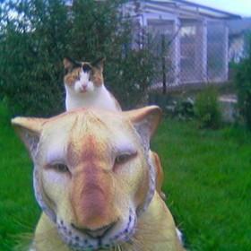moj ogrodek,moj lew i moj kotek