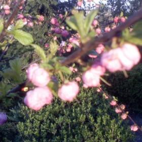 Wiosna na koniec kwietnia w moim ogródku